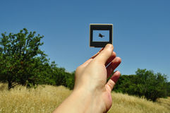 Photo slide flying bird Stock Image