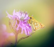 Photo small butterfly Royalty Free Stock Photos