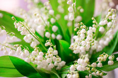 Photo of a small white flower lily of the valley Royalty Free Stock Image