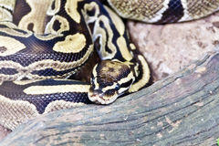 Photo of snake close up in zoo Stock Photos