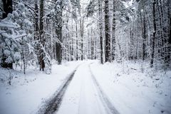 Photo of a Snow Covered Trail in the Woods stock photo