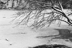 Photo of snow-covered trees and ice river. Royalty Free Stock Image