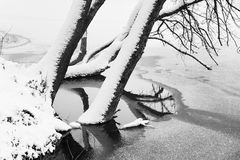 Photo of snow-covered trees and river. Stock Photos