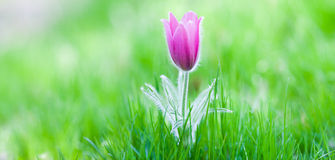 Photo of snowdrop against green grass Stock Images