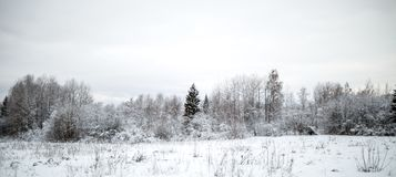 Photo of snowy field with shrubs and fir trees. During day Royalty Free Stock Photography