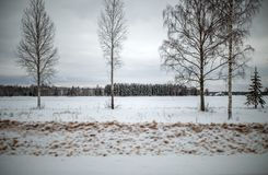 Photo of snowy field with shrubs and fir trees. During day Royalty Free Stock Images