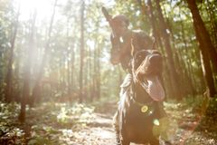 Photo of soldier in helmet and with submachine gun and dog. On task in forest stock photography