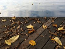 Leaves and the lake royalty free stock image