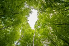 Photo of some trees in the forest Royalty Free Stock Images