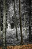 Photo of some trees in the forest Royalty Free Stock Image