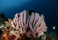 Photo sous-marine photographie stock