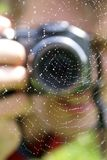 Photo of a spiderweb royalty free stock photos