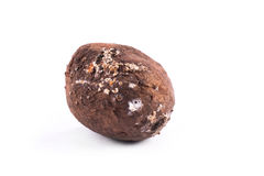 Photo spoiled potatoes. Bad products Stock Image