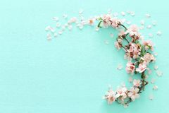 Photo of spring white cherry blossom tree on pastel mint wooden background. View from above, flat lay. Photo of spring white cherry blossom tree on pastel mint royalty free stock photography