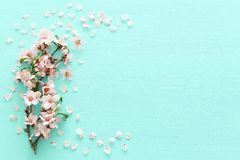 Photo of spring white cherry blossom tree on pastel mint wooden background. View from above, flat lay. Photo of spring white cherry blossom tree on pastel mint royalty free stock photos