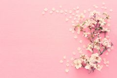 photo of spring white cherry blossom tree on pastel pink wooden background. View from above, flat lay.