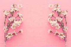 Photo of spring white cherry blossom tree on pastel pink wooden background. View from above, flat lay. Photo of spring white cherry blossom tree on pastel pink royalty free stock image