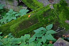 Photo of a stone slab with a convex three-dimensional carved cross covered with green moss Stock Photography