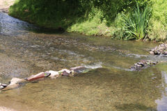 Photo of stream with small barrier made of stones Stock Photography
