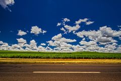 Sugar cane plantation beside highway under blue sky with clouds stock photos