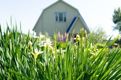 Photo of summer grass in the background of the house stock image