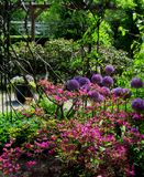 Photo of summer landscape background of a flowering ornamental Park Stock Image