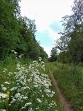 Photo of summer landscape background of a path in a European forest with wild flowers Stock Image