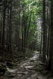 Photo of sunlit path in the mystical forest in the mountains royalty free stock images