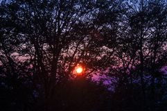 Photo of a sunset in the mountains. With the sun in the trees Royalty Free Stock Photo
