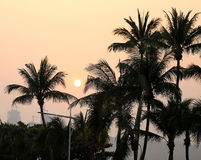 Photo sunset with palm trees Royalty Free Stock Photo