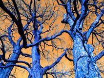 Surreal Trees in February royalty free stock photography