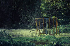 photo of the swings drowned in a swamp Stock Photo