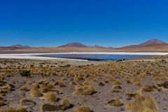 Pink Flamingos at Laguna Canapa Altiplano Bolivia Desert. Photo taken in August 2017 in Altiplano Bolivia, South America: Pink Flamingos Laguna Hedionda Royalty Free Stock Photos