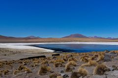 Pink Flamingos at Laguna Canapa Altiplano Bolivia Desert. Photo taken in August 2017 in Altiplano Bolivia, South America: Pink Flamingos Laguna Hedionda Stock Photos