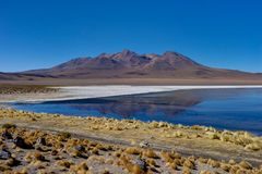 Pink Flamingos at Laguna Canapa Altiplano Bolivia Desert. Photo taken in August 2017 in Altiplano Bolivia, South America: Pink Flamingos Laguna Hedionda Stock Photography