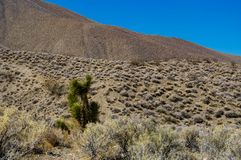Desert view with Joshua tree in Death Valley National Park Calif Royalty Free Stock Image