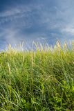 Into the grass. Cata Sand, Sanday, Orkney, Scotland. Stock Image