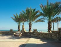 The bench under the palm trees. Photo taken on the edge of Daytona Beach. The sky was blue and the weather was nice. Photo taken in January 2016 Royalty Free Stock Photography