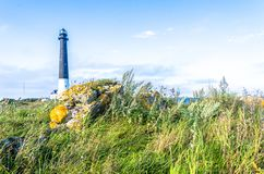 Tall uncultivated grass obscures the Sorve Lighthouse. Photo taken in the island of Saaremaa, Estonia Royalty Free Stock Photography
