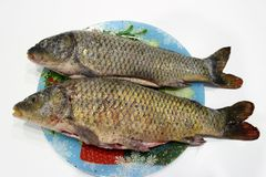 Two gutted, sprinkled with salt and pepper carp lie on a colored dish. royalty free stock photo