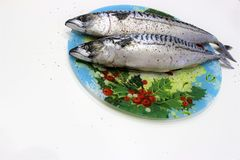 Two gutted, sprinkled with salt and pepper mackerel lie on a colored dish. royalty free stock images