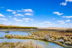 Peaceful lake under the blue sky in deep autumn on the grass land Stock Photos