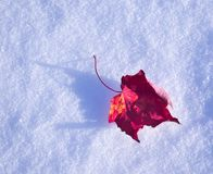 A leaf on the snow. Photo taken near my home, I wanted to make a minimalist effect by putting a leaf from a tree that I had kept royalty free stock photos