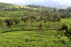 This is ohiya tea estate near Horton place stock images