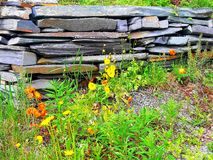 Yellow, orange and green is so beautiful whit a old stone wall stock photo