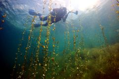 Clear water of the Donbass lakes royalty free stock photo