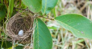 Close up shot of a nest found on a tree in the forest with an egg in it. royalty free stock image