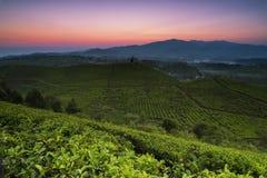 Beautiful Morning Behind Tea Plantation at Pangalengan in West Java Indonesia. This photo taken at Perkebunan Teh Malabar in Pangalengan, Kabupaten Bandung, West stock images