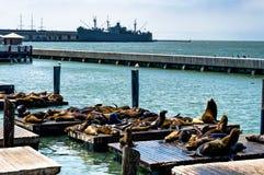 Seals at Pier 39 Fisherman`s Wharf in San Francisco California U stock photo