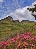 Nature in Vale do Capao. Vale do Capão, Chapada Diamantina, Brazil Royalty Free Stock Photos